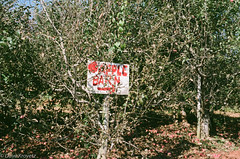 Carters Mountain orchard (davekrovetz) Tags: apple tree orchard charlottesville virginia film analog nikon nikonfe fujicolor