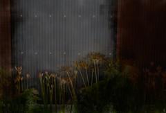 Dawn - September morning (Bamboo Barnes - Artist.Com) Tags: dawn morning september lily alley corner red tan brown grey yellow blue dull japan bamboobarnes shadow light digitalart photomanipulation painting photo ironsheet