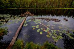 East-Helsinki, Finland. (Esa Suomaa) Tags: esasuomaa autumn lake finland helsinki trees scandinavia europe olympusomd zuikopro