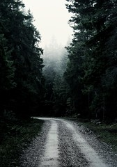 Way through the misty forest (Rojs Rozentāls) Tags: saxby estonia estland vormsi eesti läänemaa