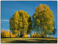 En tur rundt Nordbytjernet #3 (Krogen) Tags: norge norway norwegen akershus romerike ullensaker jessheim nordbytjernet høst autumn krogen panasoniclumixgx7