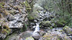 Devil's Punchbowl Creek (treegrow) Tags: newzealand arthurspass nature lifeonearth