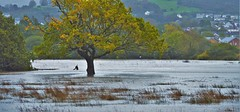 Flooded Fields (howell.davies) Tags: callum storm weather rain wind wet windy flood flooding river loughor hendy wales uk nikon d3200 55300mm