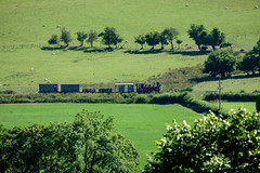 The country railway (timabbott) Tags: joan wllr steam locomotive freight train narrow gauge country countryside rural fields powys wales