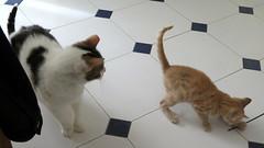380-June'18 (Silvia Inacio) Tags: mel tabby gata gatos cat cats soneca gato kitten