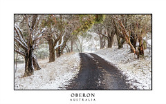 Road through snow covered trees and fields (sugarbellaleah) Tags: snow winter australia trees gumtrees snowing rural outdooroberon nsw cold freezing countryside landscape panorama scenic scenery picturesque beautiful pretty amazing wonderful dramatic mood season wintry bark