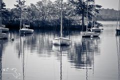 2012 christmas-70 (alanschererphotographer) Tags: boats beach capecod kids people birds boston