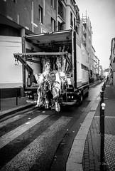 livraison (Jack_from_Paris) Tags: r0003323bw ricoh gr apsc 28mm capture nx2 lr monochrom noiretblanc noir et blanc street paris road sol urbain livraison delivery viande meat boeuf camionnette