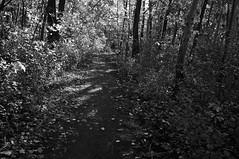 Ombres et lumières/Between the Dark and the Daylight (bob august) Tags: 2018 2018©rpd'aoust ahuntsic arbres automne autumn bw blackwhite canada fall lights lumières montréal nikkor1735mm nikon nikond90 noiretblanc octobre ombres shadows slowphotography trees montréal québec