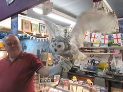 Anna (billnbenj) Tags: barrow cumbria owl snowyowl raptor birdofprey