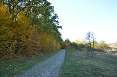DSC_5369 (Sector2000) Tags: осень золотаяосень парк природа листья деревья automn выходной лес парки