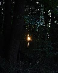 Finding the light in the dark forest (ankner.vivi) Tags: sunset sun light dark forest