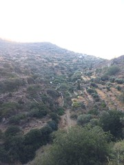(Paradiso's) Tags: landscape road canyon tree grass river dry mountain apallonia sifnos greece early morning