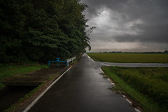Road along the waterway. (Yasuyuki Oomagari) Tags: field rain rainy waterway rice nikon zeiss distagont2821 d850 japan fukuoka 日本 福岡県 九州 田んぼ agriculture 農業