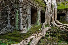 Overtaken (pdxsafariguy) Tags: cambodia angkor temple asia architecture stone religion khmer tree buddhism ancient building ruin jungle tropical archeology unesco historic carving roots overgrown moss abandoned taphrom siemreap southeastasia tomschwabel