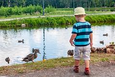 _DSC1550.jpg (Kaminscy) Tags: roztocze zamojszczyzna feeding river zwierzyniec sightseeing park boy europe ducks poland lublinvoivodeship pl