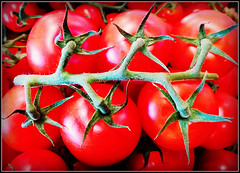 Tomatoes......... (Jason 87030) Tags: crop harvest farm shop fruit tomato tomatoes tomtom satnav spiders green red plump juicy hmmmmmmm different everything anything tag phone shot study frame border taste tasty ingedients cooking produce fresh