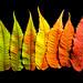 Shades of Autumn - Nuances d'automne