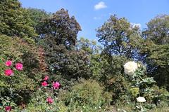 Warsaw University Botanical Garden . Poland (LeszekZadlo) Tags: park botanical garden warszawa varsovie warschau green nature flowers natureza naturaleza europe eu ue polska poland polonia pologne polen mazowsze mazovia
