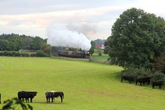 WCR 1Z73 'The Lune Rivers Trust' with LMS 8F 48151 passing Capernwray Lancashire on 29th September 2018 on route to Scarborough. © (steamdriver12) Tags: wcr west coast railways 1z73 the lune rivers trust stanier lms 8f 48151 capernwray lancashire autumn 29th september 2018 smoke steam coal oil heritage mainline preservation england countryside trees field farm bullocks