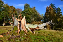 (Zak355) Tags: rothesay isleofbute bute scotland scottish baling bales mountstuarthouse mountstuart buteestate autumn