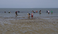 Oystering on the Flats (brucetopher) Tags: water beach sea ocean flats oysterbeds oyster shellfishing shellfish gather collect harvest rake recreation man woman waders wade waves ripples shallow lowtide tide sand shore coast coastline farm aquaculture