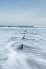 Shark Teeth! (karindebruin) Tags: france frankrijk opaalkustcoteopale sand sea water zand zee