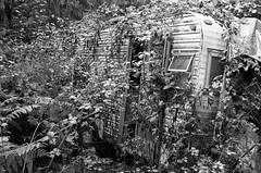 Reclaim (BRAD BROK) Tags: leica m6 hp5 ilford rodinal abandoned trailer overgrown reclaimed bando epson v750m blackandwhite bw film analog