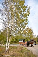 L_Titanet_on_Tour-5356 (tokerpress) Tags: ctokerpress2018 alexandertoker nataliatoker pferde russland titanenontour tokerpress