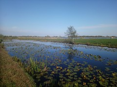 """Dutch Landscape near lake """"Reeuwijkse Plassen"""" (Menyhert) Tags: scene scenic scenery lake tree holland netherlands green water polder wide view wideangle dutch europe westerneurope sunny canal outdoor outdoors outside travel trip vacation holiday farmland countryside rural open horizon reflection reflections mirror lone lonely lonetree lonelytree xperia sony sonyxperia phoneshot mobilephone gouda reeuwijk reeuwijkseplassen bicycletrip historic beautiful beauty light cloud clouds cirrus sky blue bluesky warmweather climate enjoy"""
