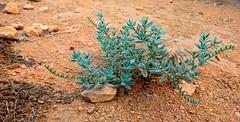 Plant (Khurram Kamal) Tags: