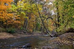 (*LiliAnn*) Tags: nature park trees creek fall