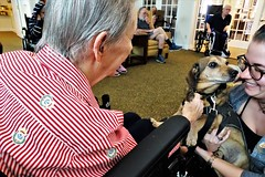20181918 Dog Day Afternoon at Brookdaie (lasertrimman) Tags: 20181918 dog day afternoon brookdaie dogdayafternoonatbrookdaie orovalley ruth