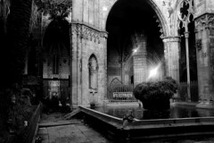 A la Catedral (Acros R) (Fnikos) Tags: church iglesia cathedral catedral building architecture construction column light bird goose garden tree palmtree plant nature pool water blackandwhite monochrome indoor