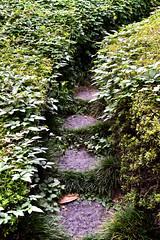 Secret Garden (papajoesm) Tags: green grow growing steps city tokyo urban garden september