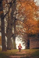 Exploring Autumn ({jessica drossin}) Tags: jessicadrossin portrait child childhood girl fall autumn orange tree trees barn sidewalk grass sky little walk happy wwwjessicadrossincom