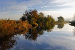 Autumn Reflections (Johan Konz) Tags: autumn morning light serene colours tree reed reflection water creek blue sky cloud outdoor landscape gouwsloot ilpendam netherlands nikon d7500