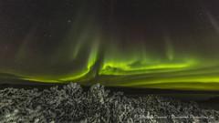 Frosty night-6354red2 (Mathieu Dumond) Tags: arctic canada nunavut kugluktuk night november fall winter northernlights aurora borealis willows nature landscape sky stars mathieudumond umingmakproductions canon 5dmkiii