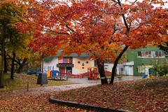 DSC_4555_ (yaa-) Tags: 札幌市 北海道 日本 jp hokkaido sapporo nikon d850 16354 nikkor 札幌 中島公園 autumn