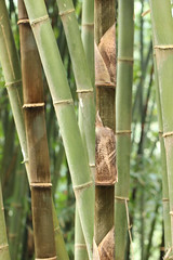 Bamboo (Nagarjun) Tags: pelling sikkim northeastindia greenery nature village walk ruralindia nepali