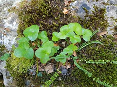 Wilderswil scenes 92 (SierraSunrise) Tags: switzerland wilderswil europe plants