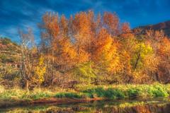 One Fall Day (CEBImagery.com) Tags: arizona creek fall oak sedona