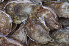 Oysters (brucetopher) Tags: oyster shellfish seafood healthy delicious remedy antioxidant zinc calcium vitamina vitaminc shell seashell clam bivalve