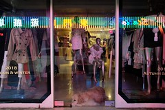 Shop dog (AntEater Theater) Tags: dogs windows shops clothing clothes zhongxiaoerd night storefronts taipei taiwan streetphotography