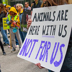 Midwest March for Animals Chicago Illinois 10-14-18 4596 thumbnail