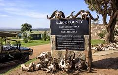 KENYA INTRODUCTION: (John C. Bruckman @ Innereye Photography) Tags: easternafrica nairobi kenya daphnesheldrickelephantorphanage orphanelephants maasaimaraconservancy outofafrica tanzania marariver crocodiles migratingherds rivercrossing maasaimarapeople lions cheetahcubs offroading wildlifephotography naturalhabitatadventures httpswwwnathabcom