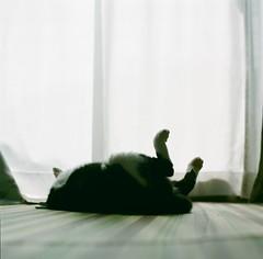 (f h y) Tags: cat hasselblad fujifilm pro160ns 6×6