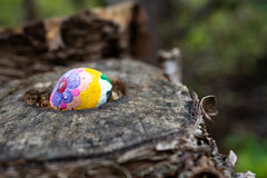 Surprise in the Tree (Clif Budden) Tags: 2018 bowringpark canada environment nl nature newfoundland october outdoors stjohns