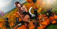 Pumpkins kitties (meriluu17) Tags: foxcity ersch hextrordinary boudoir glamaffair pumkins pumpkin cat cats spoooky spooky halloween field autumn cute pet animal people portriat