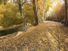 IMG_2818 (August Benjamin) Tags: provo provoriver provorivertrail fall utah mountains provocanyon fallcolors autumn trees leaves orem utahvalley jogging